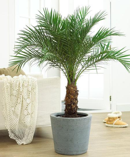 10種NASA科學家認可的「能對抗感冒+失眠+胸悶」淨化室內空氣植物。