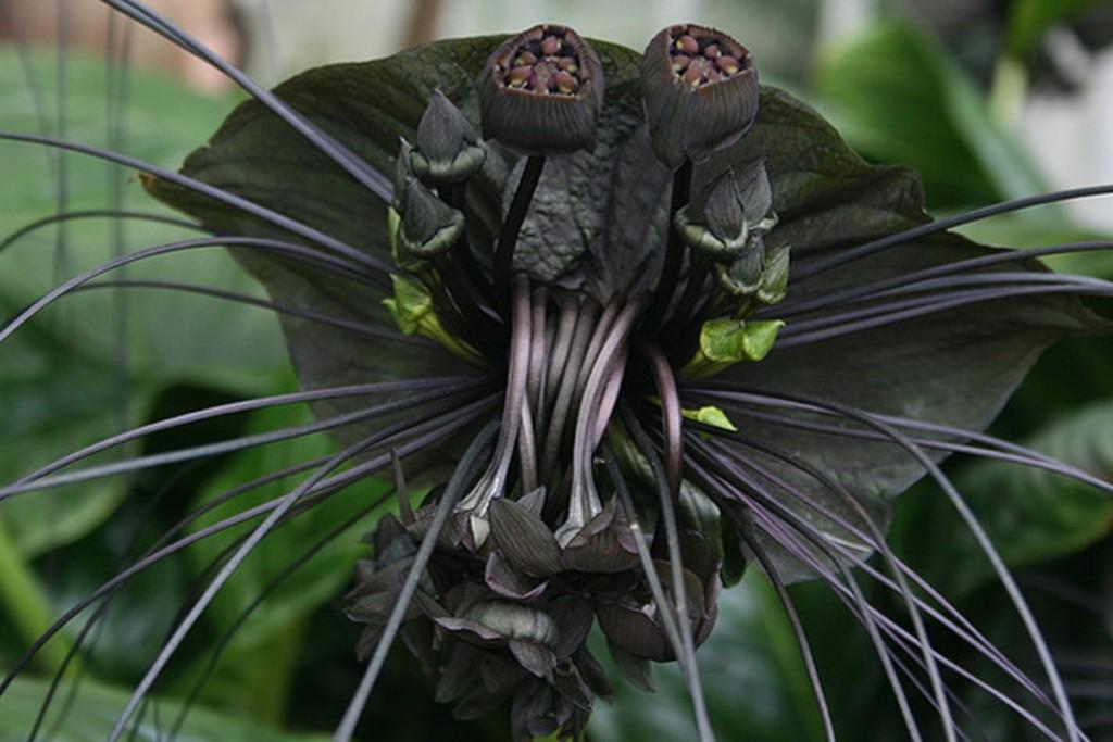 17種你看到千萬不要碰的「恐怖異形真菌植物」!「娃娃眼」可以瞬間殺人!