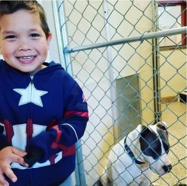 4歲小男孩一直夢想「領養狗狗」但因家裡狀況被拒絕,他想出「超暖新方法」徹底改變遊戲規則!