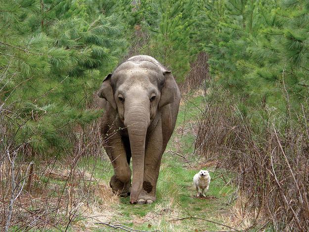 憂鬱大象耐心等待3週,「小夥伴」終於出現時她開心到炸!
