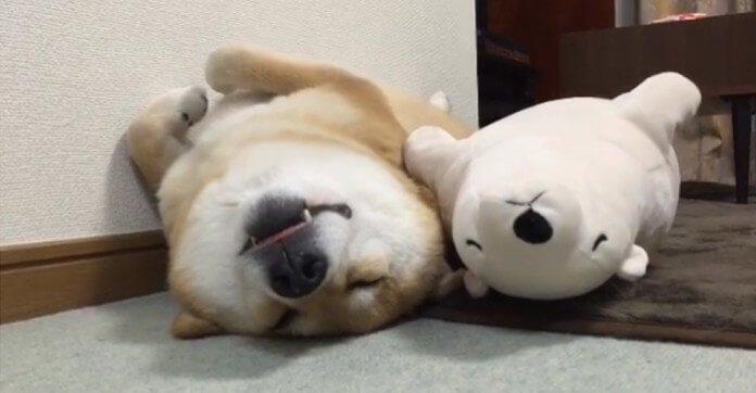 狗狗「晚上不睡覺」跑來跑去?最新研究:他們是在跟人一樣「思考狗生」!