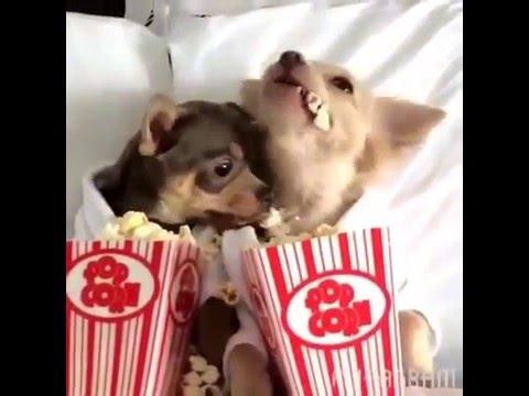 狗狗「肉球」聞起來像爆米花?原來是「它們」散發出來的!