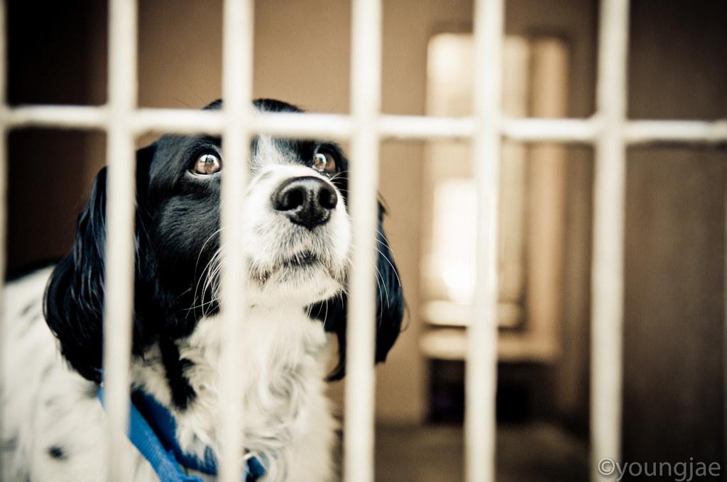 世界最棒法令!加州剛通過「寵物店只能賣收容所動物」新法規,全國網友歡騰!
