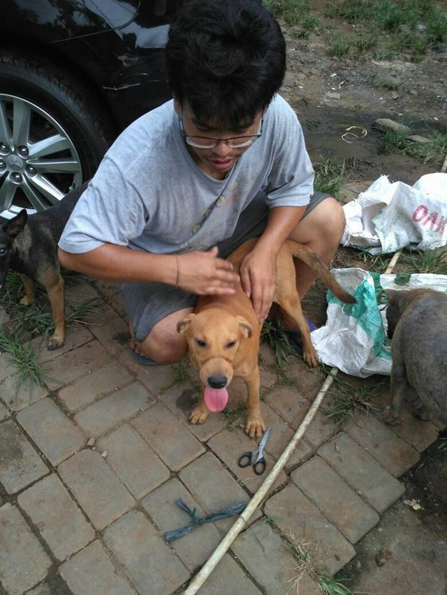 2隻狗被「綁住嘴巴塞在麻布袋裡」,路人付「1千元解救」救出後畫面讓人辛酸...