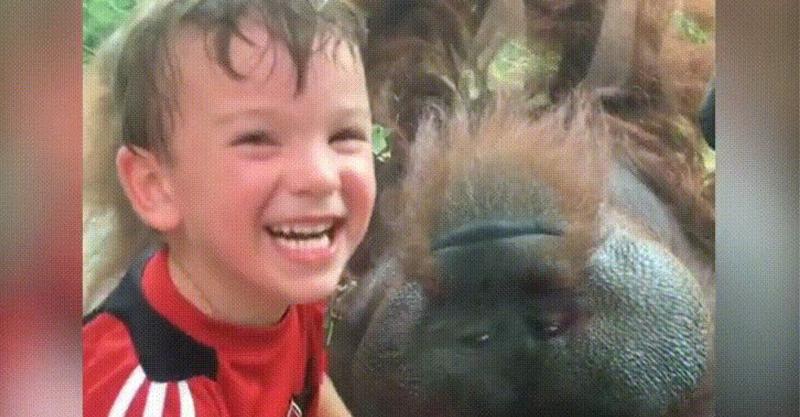 紅毛猩猩超會!「堅定又溫柔」的眼神以為看錯,男孩招架不住親一下看到奇蹟!