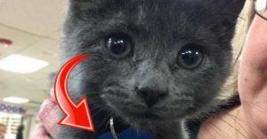女子領養超萌小貓,把「名牌翻過來」讓她當場落淚!