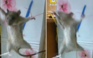「看你還敢不敢!」男子氣憤吊起老鼠不停猛抽,網友:噁心 (影片)