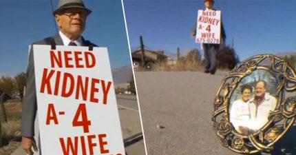 74歲爺爺為救愛妻當「人肉廣告」,每天掛大型標牌走數公里:「我需要一顆腎臟!」
