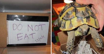 把烏龜包起來丟冰箱冬眠!2個月後退冰嚇壞...