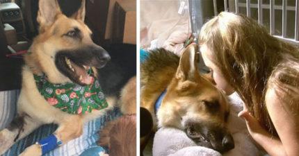 被收養狗狗突然瘋狂亂跳...「變身肉盾」保護7歲小主人差點死!獲頒「英雄狗獎」+零食一包!
