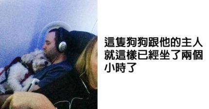 30張在飛機上碰到「超毛又爆萌」的乘客!