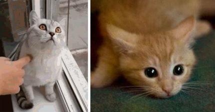 看到鬼了?貓咪總是莫名其妙「望著空氣」 獸醫解釋原因