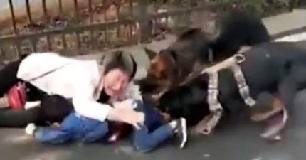 孫子被惡犬「瘋狂撕咬」痛苦哭喊,阿嬤「咬我就好了」以肉身護在愛孫身上!(影片)