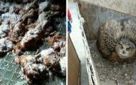 384隻雞一夜嚇死!「夜魔」偷襲雞舍「開燈瞬間瞪大眼」雞農嚇到閃尿!不能殺!