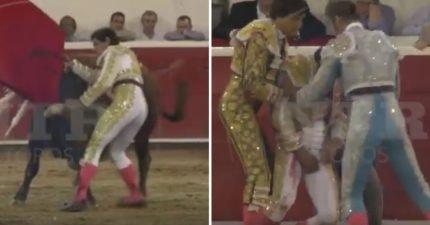知道人類男人的弱點了!鬥牛士被公牛拋到空中一圈,牛角「正中蛋蛋」當場血流如柱手壓著想挽救子孫