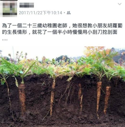 「為了讓小朋友知道紅蘿蔔長在地下」!她怪怪的大費周章2小時烈日下「刮土」,網友大讚:這才值得跟風!