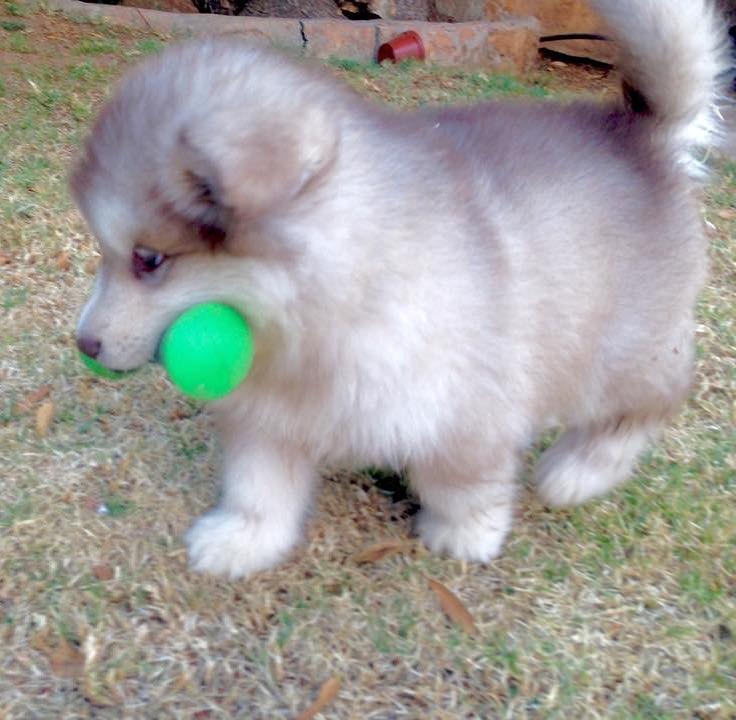 她以為收養到了「可愛迷人小型犬」 結果一長就停不下來啦!