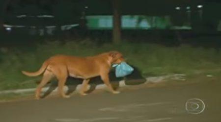 感動!討食狗狗每次都只吃一半就「打包跑走」,女子偷偷跟蹤...