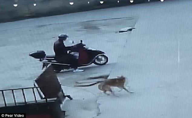 天冷狗肉進補最好?!中國4名男子路邊「隨機射殺小狗」賣給餐廳,每隻「不到300元」寵物狗也不放過!