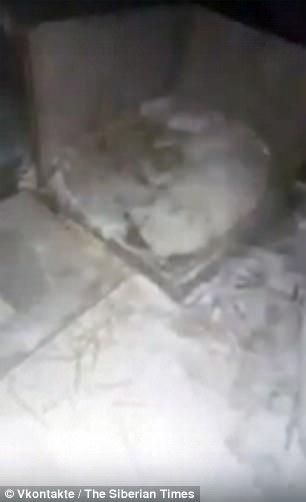 殘忍飼主將狗放在 32℃戶外「淋水活活凍死」,狗狗死前「睜眼哀嚎抽蓄」逼哭救援人員 (影片)