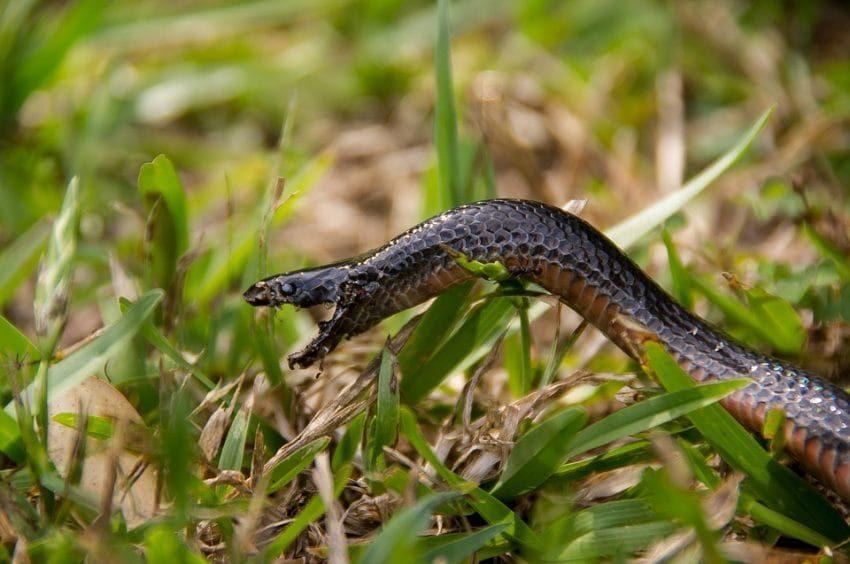 照片中有一條「紅腹黑蛇」,你找的到在哪嗎?網友眼睛脫窗:我現在應該被咬了!