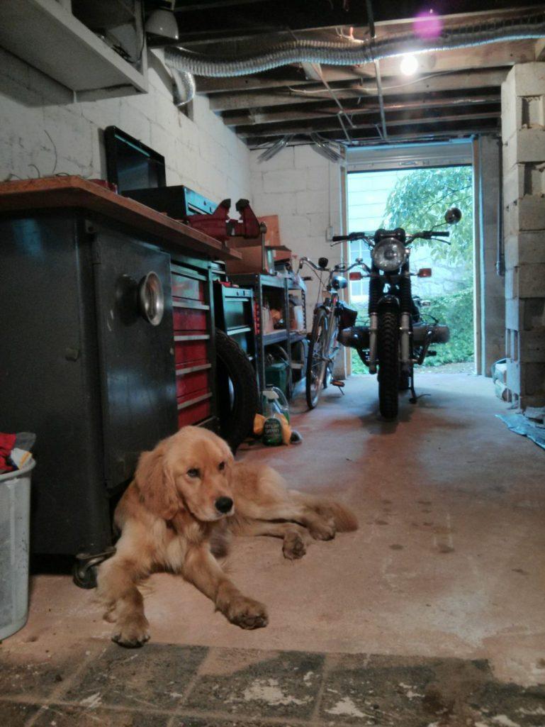 颶風帶來了水災跟「家門口的小黃金」暖男看了一眼馬上急救收編!