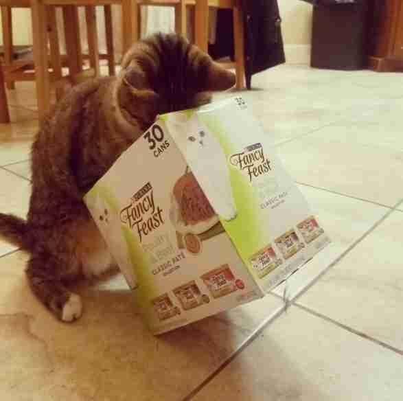 「眼睛看不見」盲貓無法得知水盆裡沒水了,只能用「最可愛方式」確認!