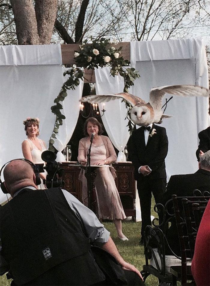 30幾張讓你看到按快門時機有多重要的「慘被搶走風采」地表最強爆笑亂入婚紗照!