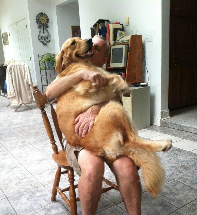 外表長大內心卻沒長大!20張身體大膽子小的超爆笑傻狗狗生活照!