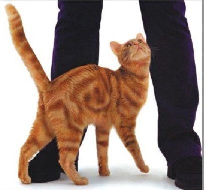 貓咪哥哥主動守護妹妹超有愛主人超感動,但一抱走寶寶貓咪可惡「原形畢露」讓主人氣炸!