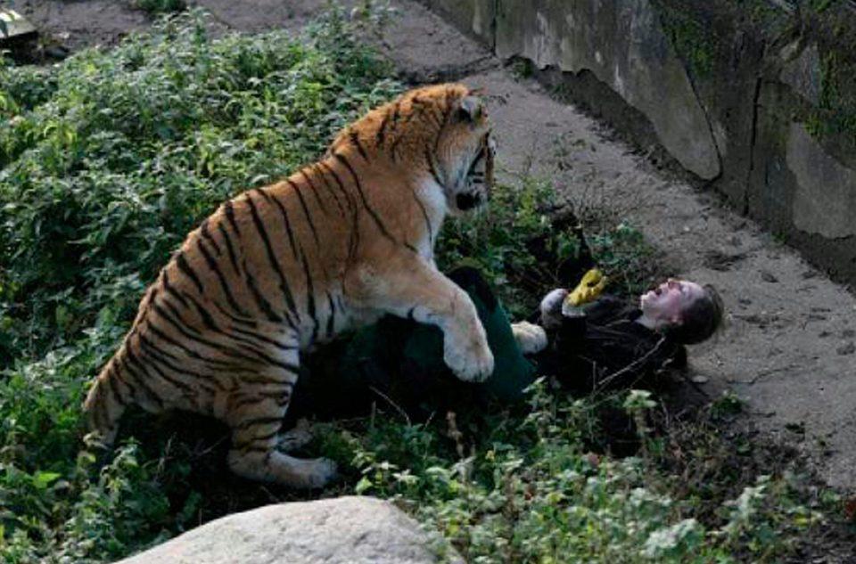 老虎突然猛撲女飼育員「瘋狂撕咬+滿臉是血」不斷尖叫,勇敢遊客救她一命!(影片)