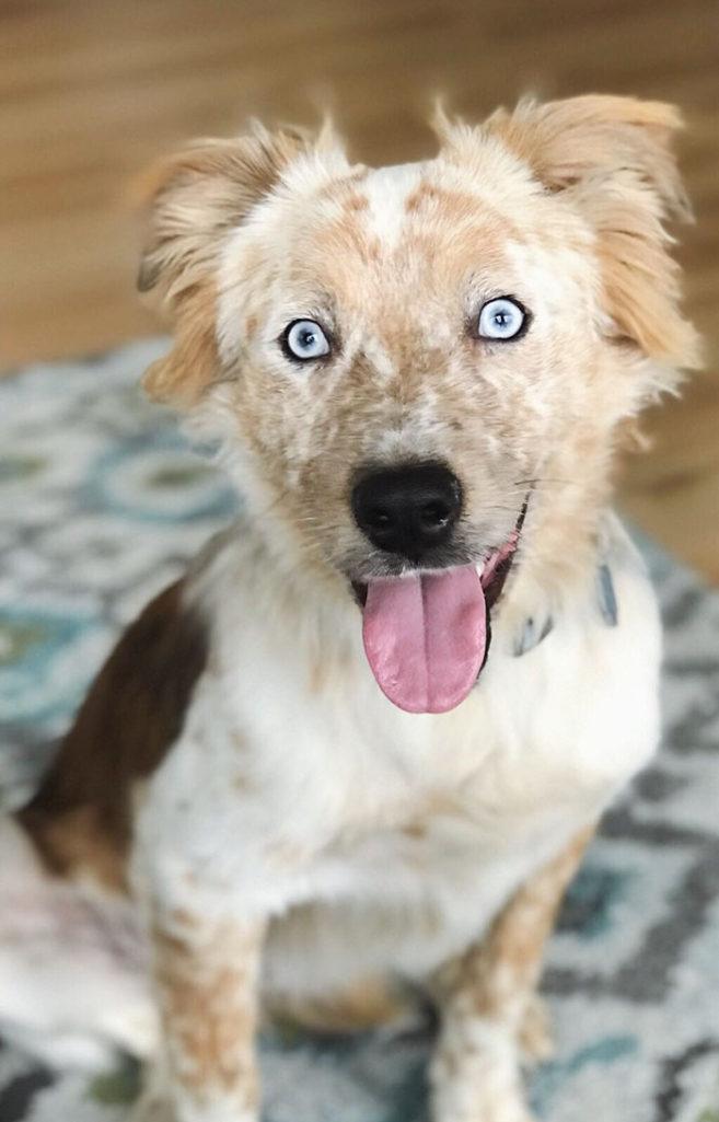 收容所看到黑眼睛狗狗很喜歡決定領養,一回家狗狗開心到「變身」給他們最大的驚喜!