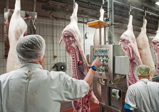 英國率先立法通過,屠宰場將全面「加裝監視器」禁止殘忍屠殺動物!