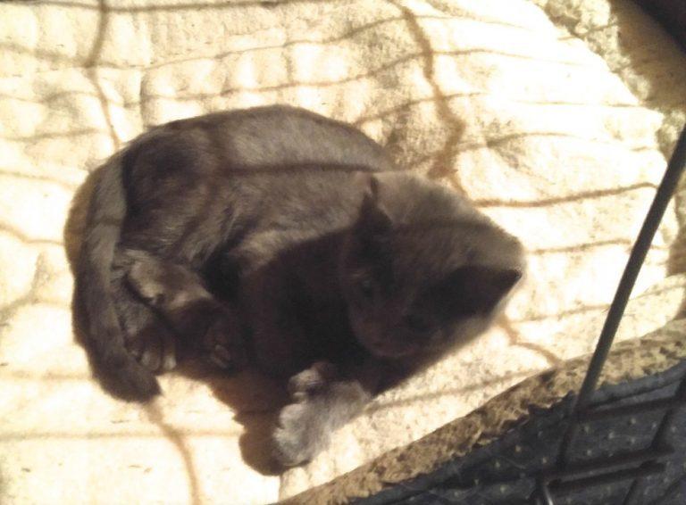 女子领养超萌小猫,把「名牌翻过来」让她当场落泪! -5a0be7028bff4