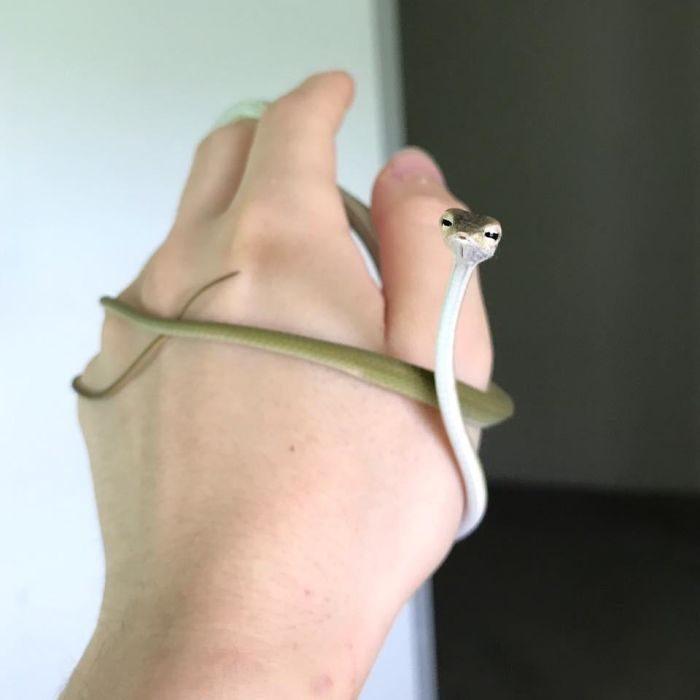 30張會讓人改變心意「愛上小蛇蛇」的可愛萌照!