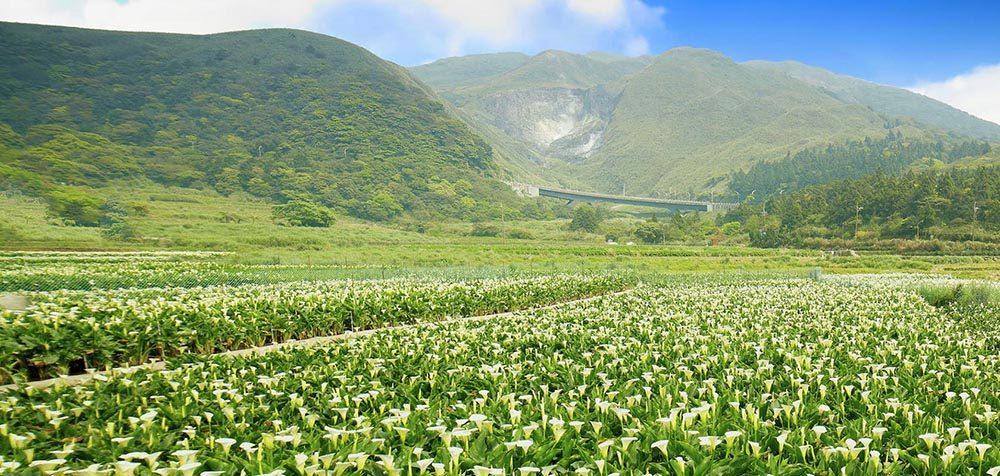 荷蘭科學家測試發現「台灣土地能量」世界之冠!南港公園待1小時效果勝過「森林浴一整天」