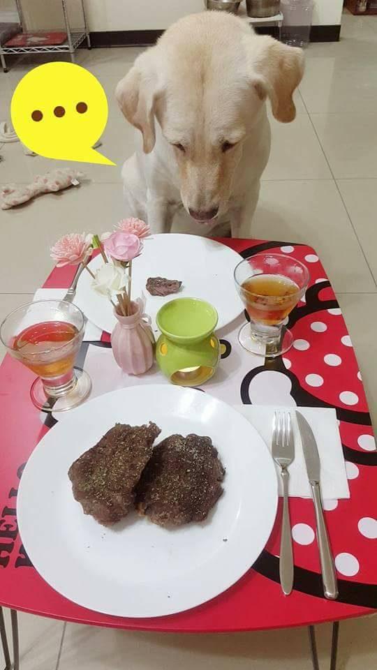 精心準備美味特餐,汪汪卻氣到「懷疑狗生」!往對面一看...主人你說你是不是故意的?