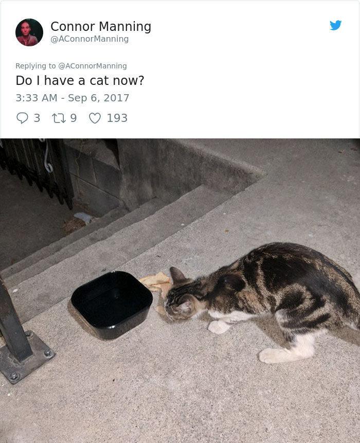 男子路上碰到一隻流浪貓,結果超展開證明「一向都只有貓選人沒有人選貓」!看他一步步墮入陷阱...