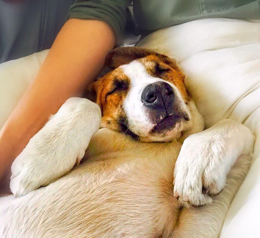 主人一開始擔心狗狗不會對貓咪友好,但現在他們的「史詩級冒險照」讓所有網友都眼紅了!