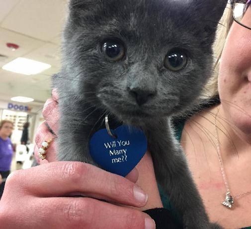 女子领养超萌小猫,把「名牌翻过来」让她当场落泪! -6j81q-kp2