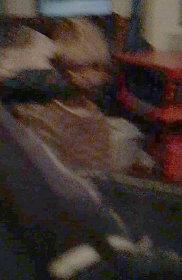 「头剩一半」男孩怨灵后续!他终于拍到证据照,调亮后「他朝他冲过来」… (内有恐怖照片慎入!) -Adam-Ellis-4