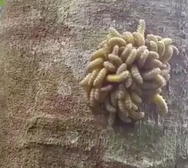 這個「謎樣生物」是大自然最驚人的演變,近看後「人類該多學習」... (慎入)