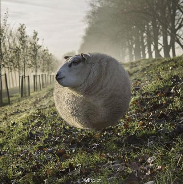 17张各种动物「变成球形」可爱到让人会心律不整的图片! -Screen-Shot-2017-11-14-at-11.22.11-AM