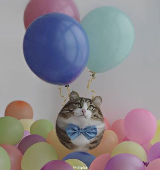 17張各種動物「變成球形」可愛到讓人會心律不整的圖片!