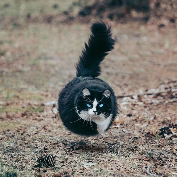 17张各种动物「变成球形」可爱到让人会心律不整的图片! -Screen-Shot-2017-11-14-at-11.25.15-AM