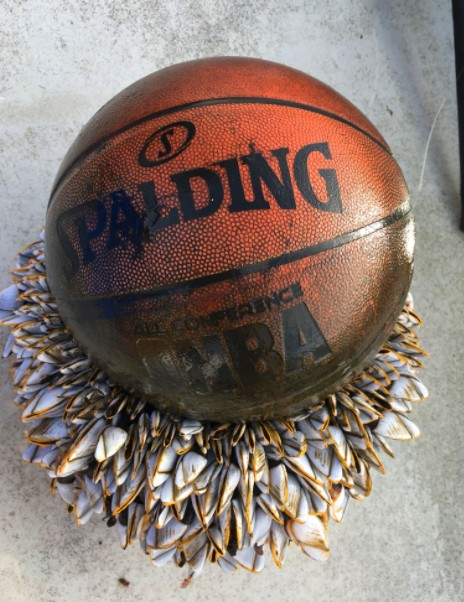 海面上看到「奇特球體浮浮沈沈」,打撈上岸驚覺是「來自地獄的籃球」下面超噁!