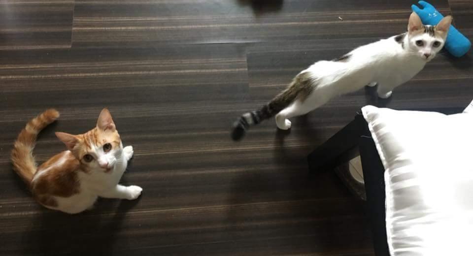 帶了鑰匙卻回不了家!她慘被反鎖「出動吊車」才進家門,門一打開傻眼貓咪…(影片)