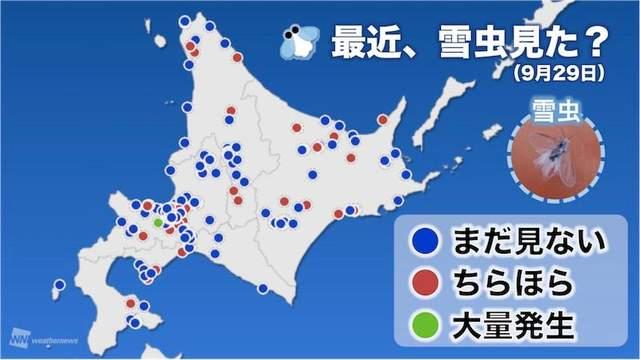 初雪降臨?神秘「雪之妖精」現身東京網暴動!傳說看到「牠」7天內就會下雪...「他們」很不爽!