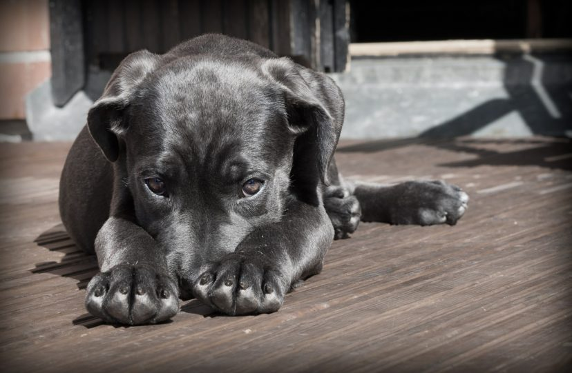研究發現:人不愛人類,其實比較愛狗!狗狗還比人類小孩子還更重要!