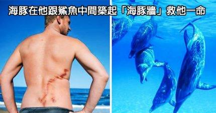 7隻超有靈性勇敢救人的「超級動物英雄」!海豚們在鯊魚前組成「一道海豚牆」保護他